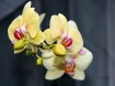 Pretty in Blooom