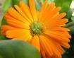 Flower Fragrance ...