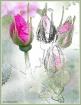 Developing Roses