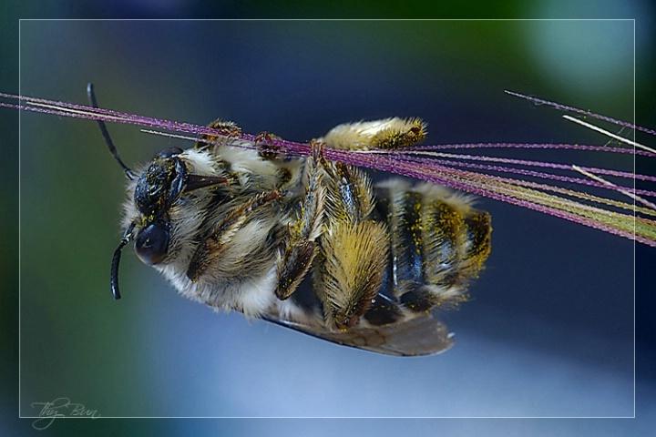Circus Bumble Bee