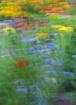 Floral Impression...