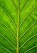 Plant Skeleton