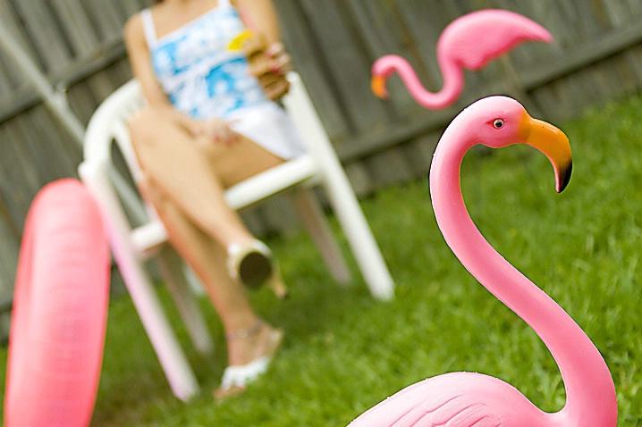 Pink Flamingos - ID: 890845 © Wendy M. Amdahl