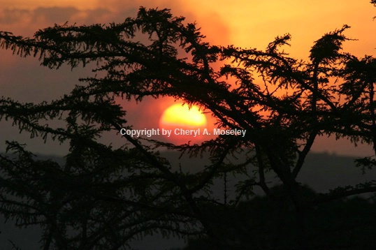 Eye of the Serengeti Sun 7536 - ID: 916067 © Cheryl  A. Moseley