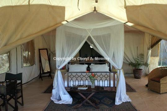 Safari Tent #1 - ID: 917563 © Cheryl  A. Moseley