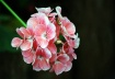 Bouquet of Deligh...