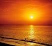 Go for the sun