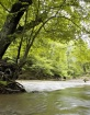 Virginia Stream