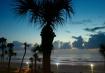 palm before sunri...