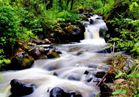 Little Mallard Creek--Idaho