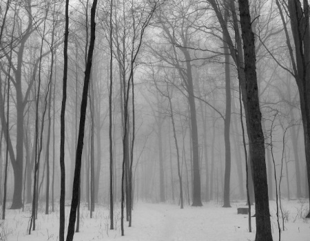 Unchanted Forest