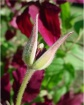 Heart Of A Flower...