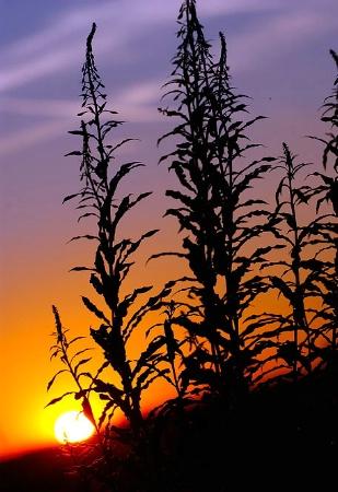 Sunset at Leavesden