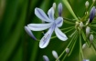 Lovely Lilly of t...