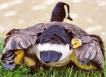 ~ under mom's wing ~