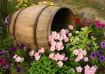 Just a Barrell of...