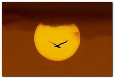 Gull To Sun