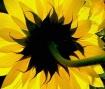 Floral Spirals
