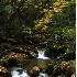 © Bob Peterson PhotoID # 1097111: Fall in the Blue Ridge