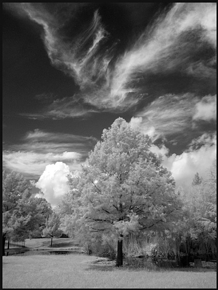 Summer Skies - ID: 1116462 © Greg McCroskery