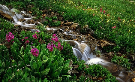 Floral Brook - Independence Pass, CO