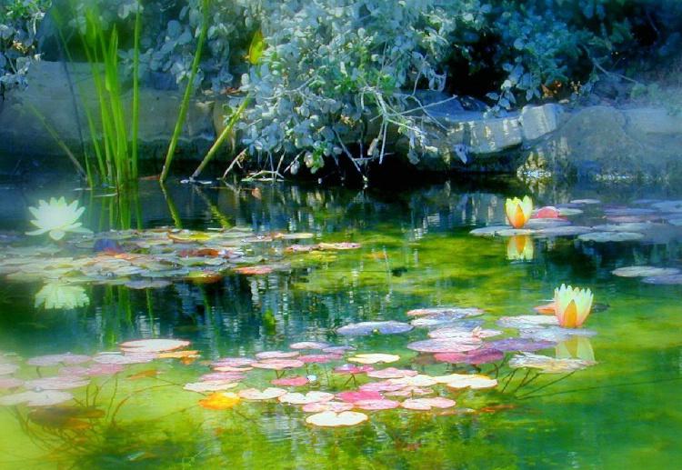 Heavenly Pond - ID: 1148807 © Lynn Andrews