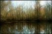 Bayou Reflection