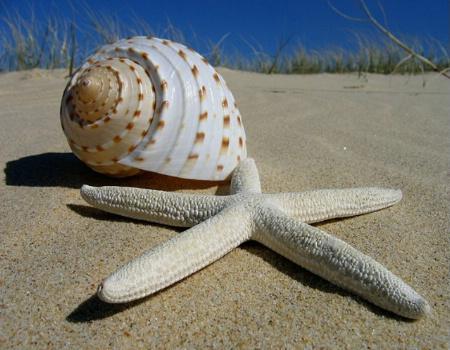 She sells sea shells.....