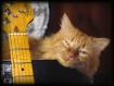 Blues Kitty