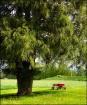 Big Tree Little W...