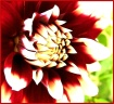 Blazing Floral