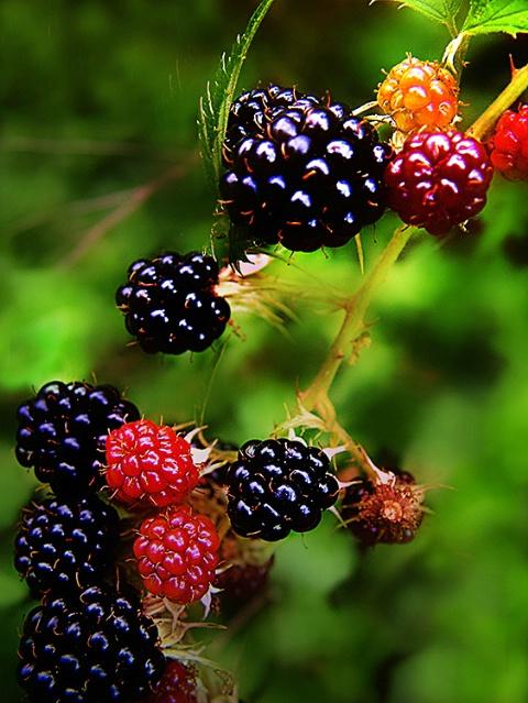 Fruit of the Limb