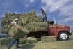 Tossing the Bale