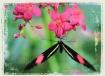 Butterfly Tapestr...