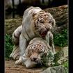 Animal Desire..
