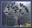 Dew on Blue