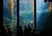 Aquatic Window