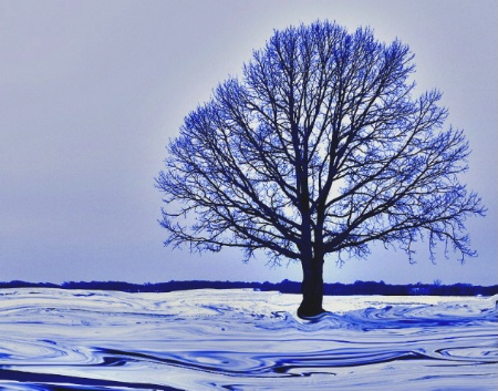 Blue Tree in Snow