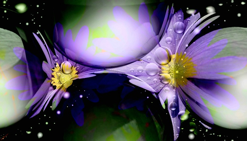 Flowers from outer space...