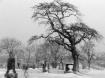 Graveyard tree 2