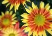 Sunshine in Bloom