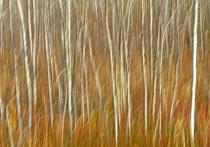 Grass Dance With Aspen