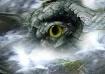 'Gator-Wood&#...
