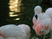 Birds of a Pink F...
