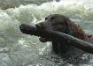 Jake Saving A Log