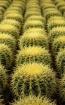 Pillows prickly