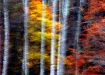 Colors And Birch