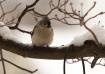 Winter Birds - Tu...