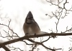 Winter Birds - Bl...