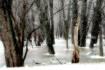 Snow Along Otter ...